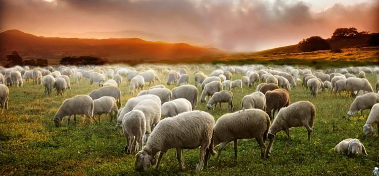 Božanski pastir