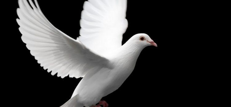 Obećanje Svetog Duha
