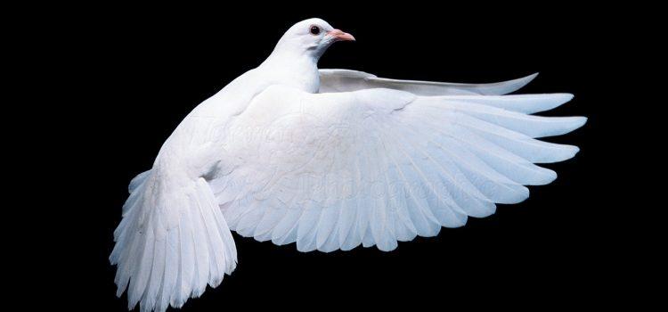 Sveti Duh kao Osoba