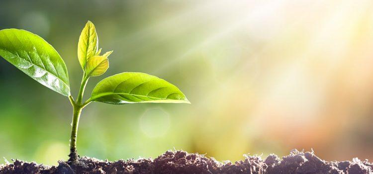 Kako rasti u Kristu – drugi dio