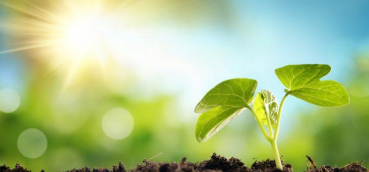 Kako rasti u Kristu – treći dio